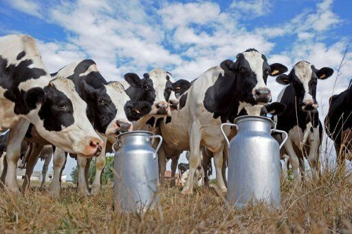 Dairy Farm Manager